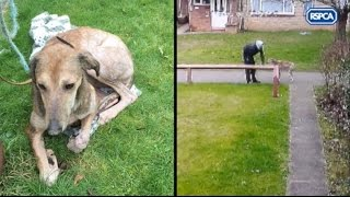 Scumbag dumps lurcher dog on CCTV - Help RSPCA find the culprit
