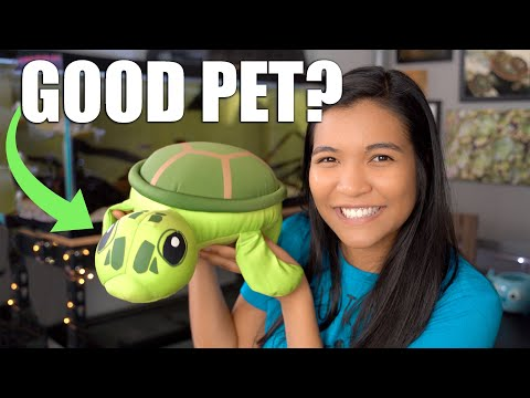 WHY TURTLES MAKE GREAT PETS 🐢(for Some People)