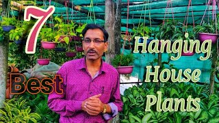 7-best-hanging-basket-house-plants-you-must-grow-now