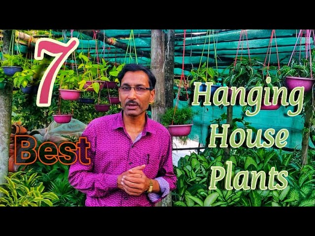 7 BEST Hanging Basket House Plants You Must Grow Now.
