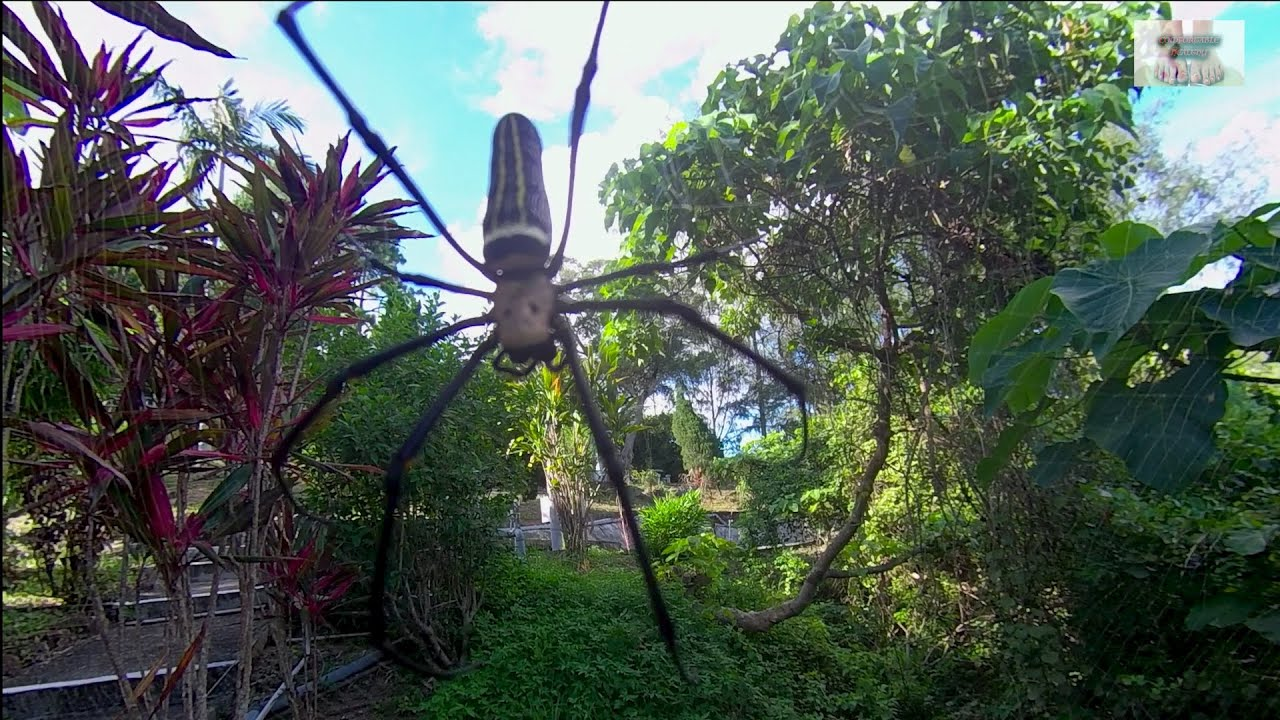 VERY BIG SPIDER