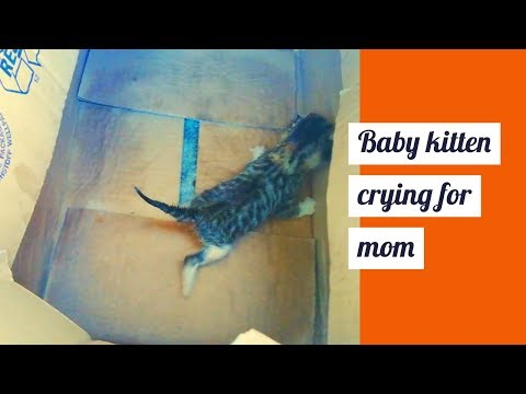 Baby kitten cries for mother