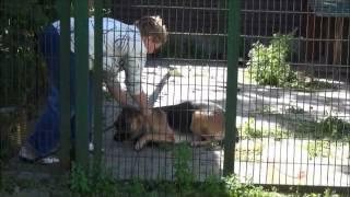 www.dogfriend.org: Пристегивание поводка пугает собаку(Во время пристегивания поводка хозяйка наклоняется над собакой и делает множество неловких движений вокру..., 2012-10-14T14:15:38.000Z)