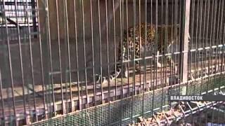 Владивостокский зоопарк(, 2014-01-15T04:09:58.000Z)