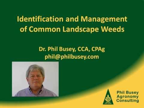 Weed control in Florida turfgrass with herbicides and cultural practices