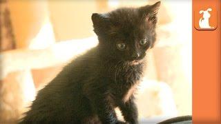 Fuzzy Kitten Climbs On My Back For Cuddles - Kitten Love