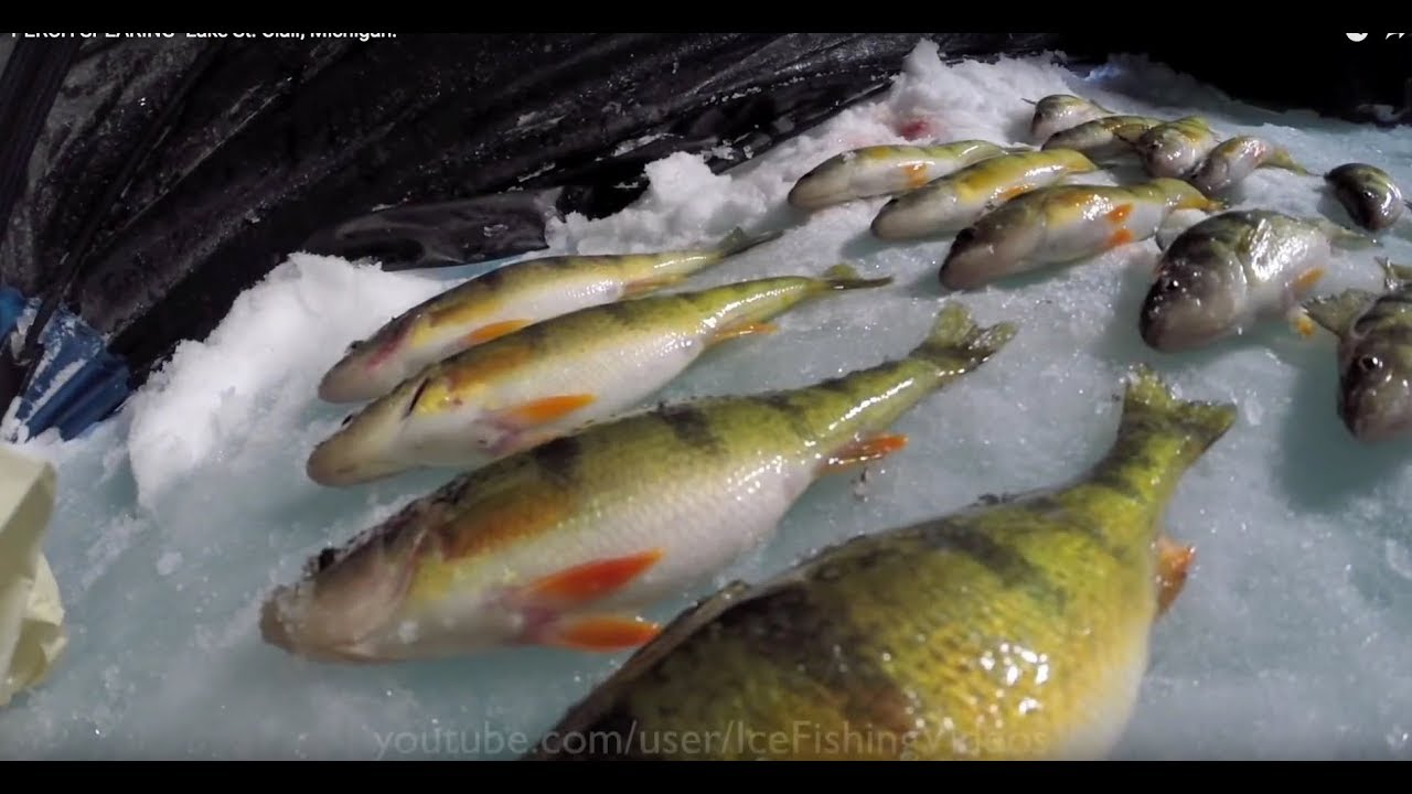 Perch spearing lake st clair michigan youtube for Ice fishing lake st clair