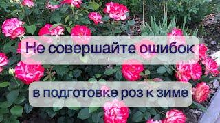 Как выбрать для себя правильную схему в подготовке роз к укрытию Важная информация на 24-ой минуте
