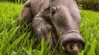 Топ cамые уродливые животные мира