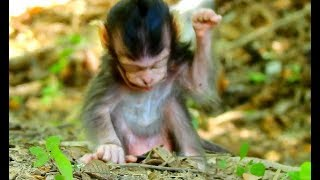 Don't Missed This Clip |The Most Funny Baby Monkey Lizza | Lizza Make Fun And Full Of Release Stress