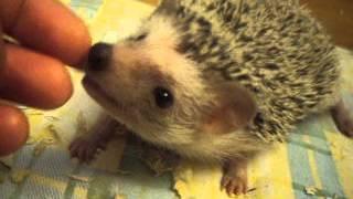 ježek - Buráček a sliny - pokračování