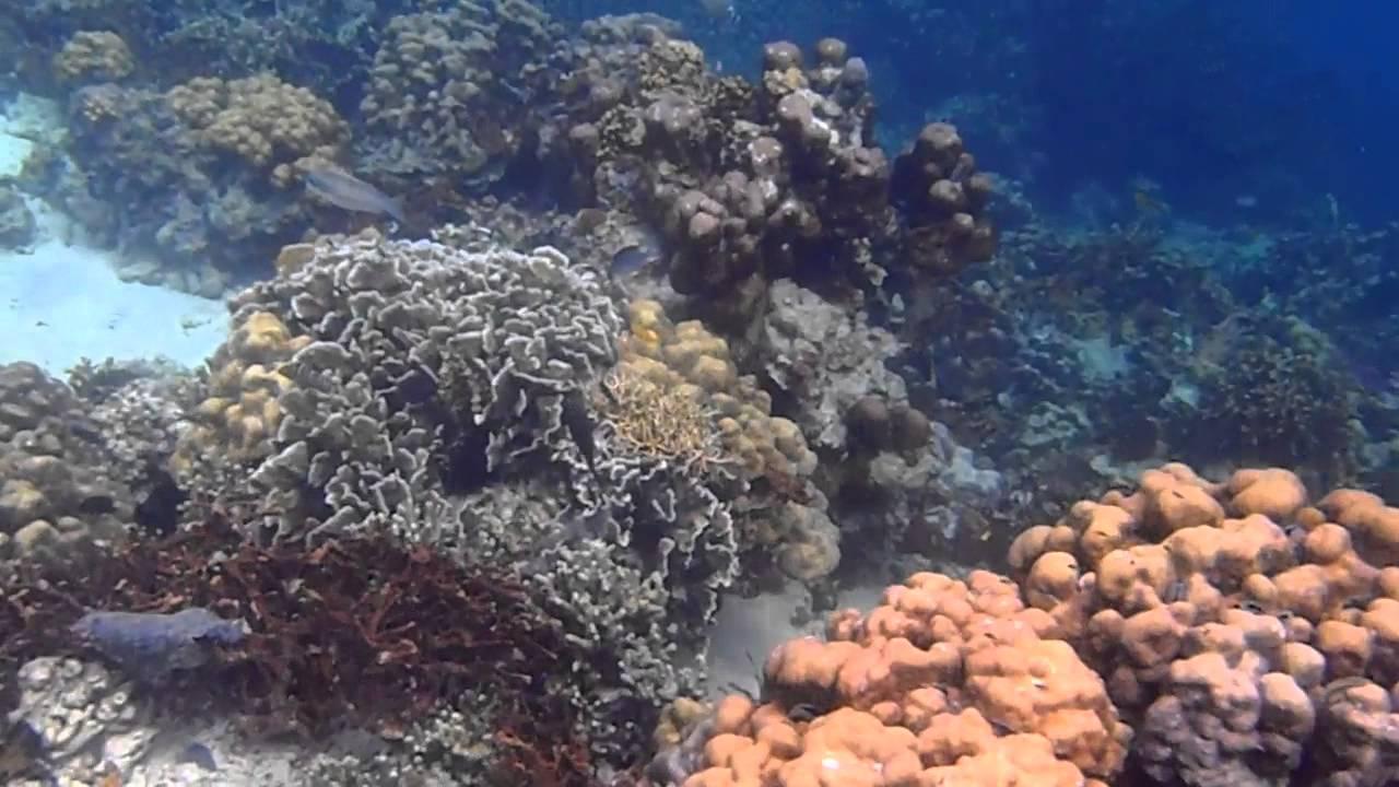 bawah laut pulau putri sibolga - YouTube