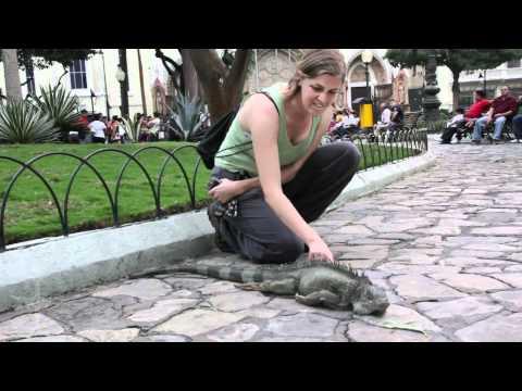Meet the Iguanas of Iguana Park, Guayaquil // Jet Set Zero