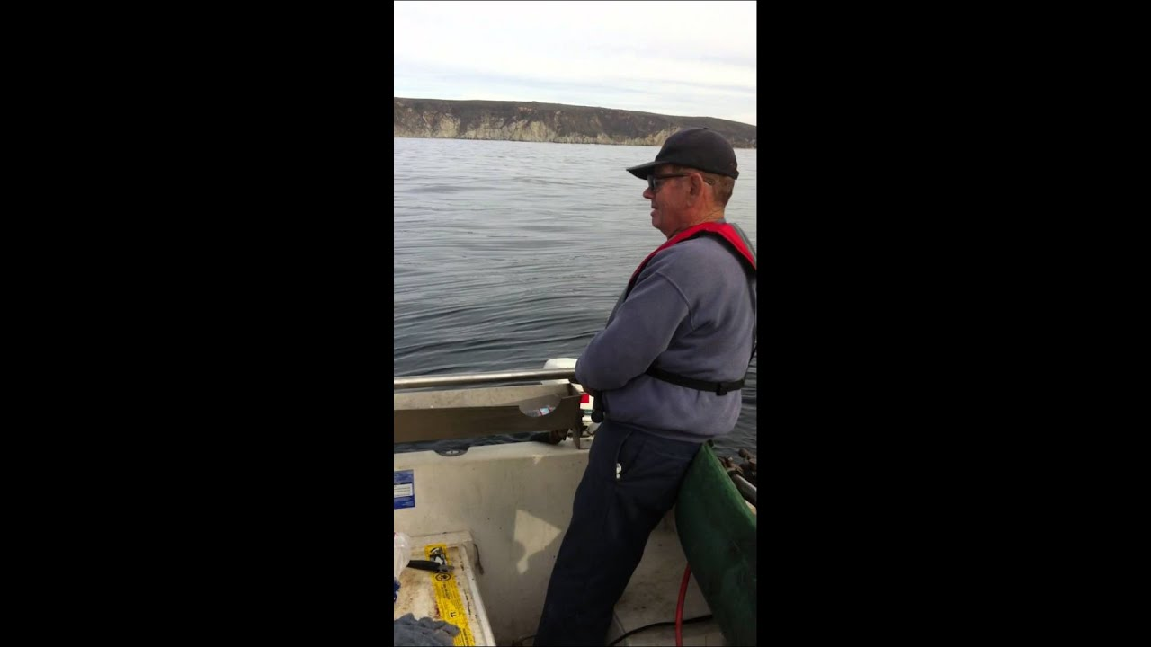Rock cod fishing in bodega bay commercial youtube for Bodega bay fishing reports