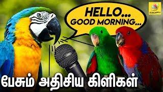பேசும் அதிசய கிளிகள் : Amazing Talking Parrots and Animals For Sale At Chennai | Congo