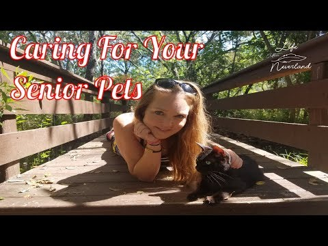Fur Baby Friday!  Tips For Taking Care of Your Senior Cat