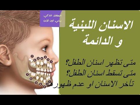 كل شيئ عن اسنان الاطفال اللبنية و الدائمة Youtube