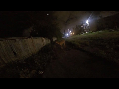 Toronto Wildlife Centre rescues trapped deer
