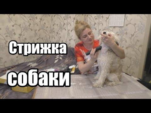 Как самой подстричь собаку машинкой в домашних условиях видео уроки