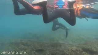 小琉球浮淺 綠蠵龜