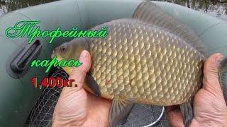 Рыбалка на карася, осень боковой кивок, зачетный трофей***Мой отчет о рыбалке