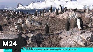 Новости мира за 19 декабря: пингвины устроили детский сад на острове в Антарктиде - Москва 24