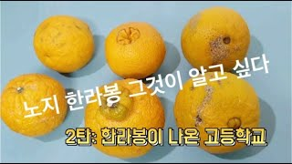 노지한라봉 그것이 알고싶다 2탄. 한라봉의 상처란?