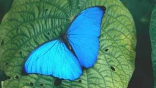 Paul Mauriat - Butterfly