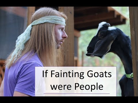 If Fainting Goats were People - Ultra Spiritual Life episode 75