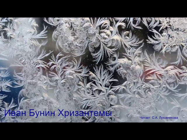 Светлана Луковникова читает произведение «Хризантемы» (Бунин Иван Алексеевич)