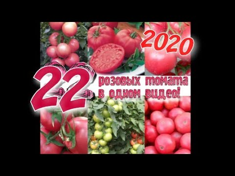 Лучшие профессиональные розовоплодные томаты на 2021