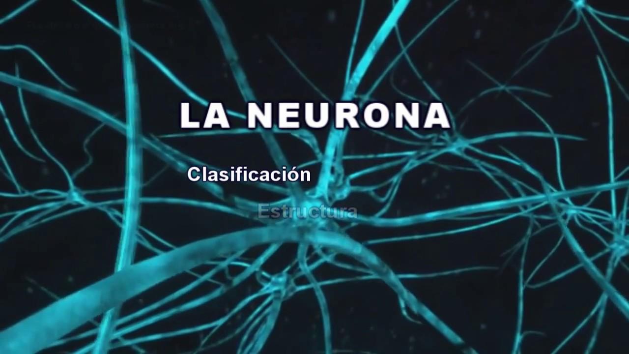 La Neurona Clasificación Estructura Y Funciones