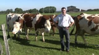 Terre comtoise- L' alimentation des bovins - Gaec de la Charmée