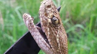 Rattlesnake Hunting!