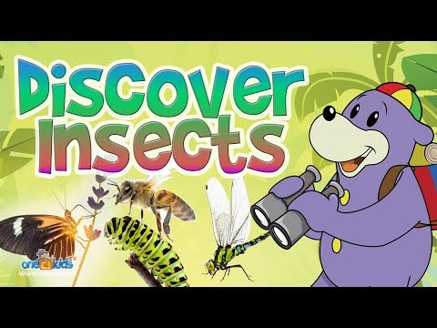 New TV Series - Zaky's Discoveries - INSECTS