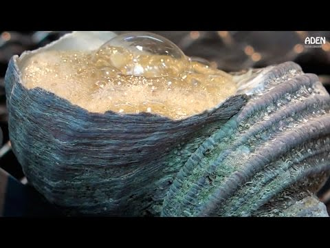Turban Shell Barbecue & Clam Sashimi - Street Food Japan