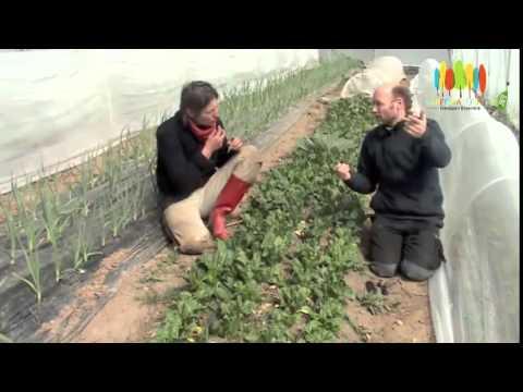 """Entrevue avec une """"agricultrice naturelle"""" en chemin vers la permaculture"""