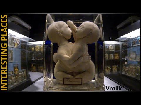 MUSEUM of GENETIC MUTATION in Amsterdam, Vrolik
