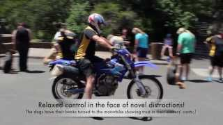 Alpha Dog Training: Motorbike Distraction - Dec 2013