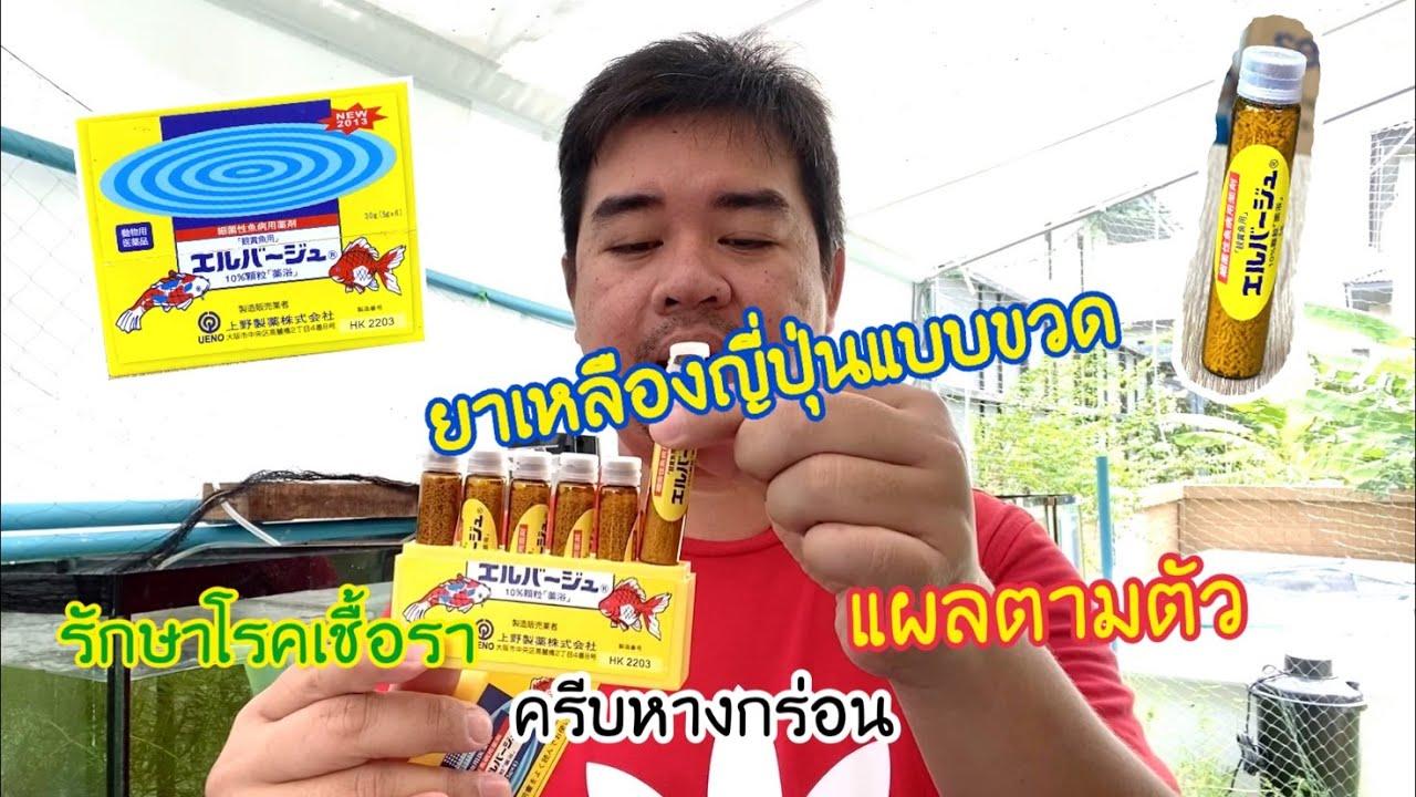 ยาเหลืองญี่ปุ่นแบบขวด สำหรับรักษา โรคที่เกิดจากเชื้อแบคทีเรีย  ตัวเปื่อย  ตกเลือด  ครีบเปื่อย
