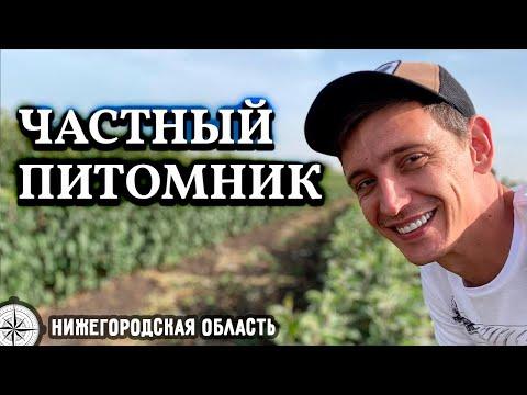 Вопрос: Какой сорт огурцов подойдет для выращивания в Приморском крае?