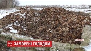 80 тисяч курей заморили голодом у фермерському господарстві на Херсонщині