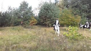 Hubertus 2011 Stado Ogierów w Gnieźnie cz.2 HD
