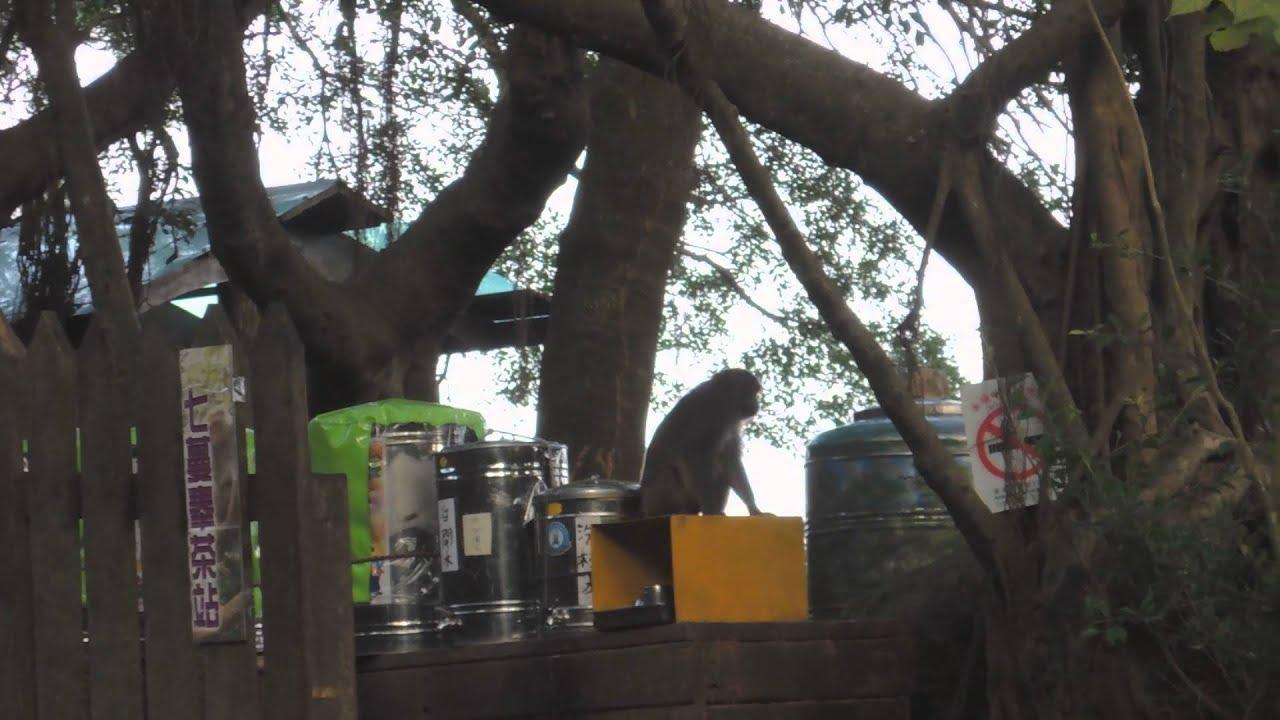 獮猴 喝水 DSCN8749 - YouTube