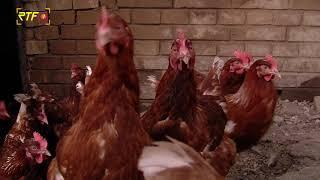 In mehr als 50 Betrieben gibt es Geflügelpest-Verdachtsfälle