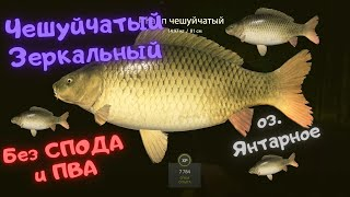 Русская рыбалка 4 РР4 озеро Янтарное КАРП Чешуйчатый Зеркальный