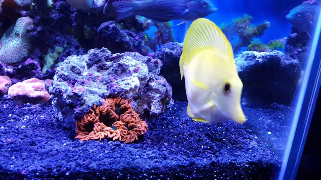 40 gallon breeder reef black sand youtube for Black sand fish tank