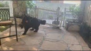 Little girl sneaks off to school to avoid upsetting her dog