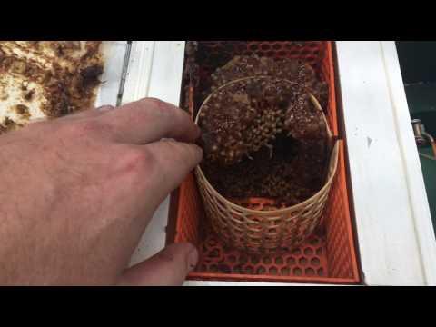 Powell split frames for Australian native bees 🐝