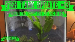 fish aquarium update 13 we moved the guppy fry to the 10 gal new air pump new plants